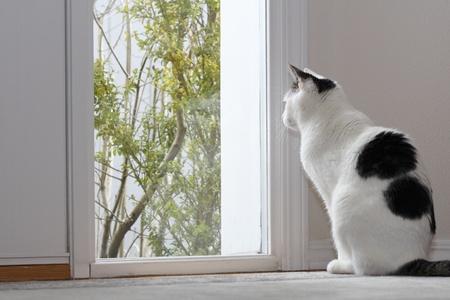 dentro fuera: Kitty Cat mirando por la ventana junto a la puerta de una casa mientras se est� sentado en el suelo en el hall de entrada durante el d�a. Foto de archivo