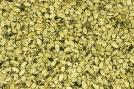 sprouted: Organic raw, sprouted pumpkin seeds dried make a delicious natural snack