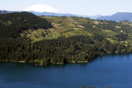 helens: Expansive view of large lake and forest with some clear cut hills and snow capped Mount St Helens in the background.