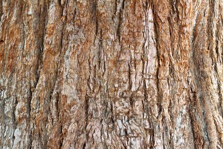 sequoia: Close up background of the bark of a few hundred year old sequoia evergreen tree in Washington State