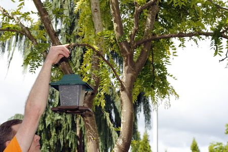 Man in a back yard hanging up a plastic bird feeder filled with black oil sunflower seeds on a branch in a tree  photo