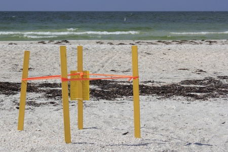 cordoned: Four yellow sticks with orange tape connecting them all is surrounding a place in the sand on the Gulf coast beach where wild turtles have laid their eggs on Lido Key in Sarasota.