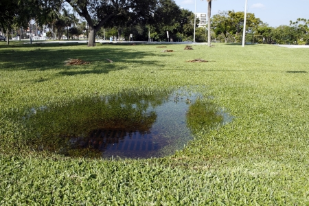 In some park grass in Fort Lauderdale, Florida is a sewer storm drain clogged with water from a recent rain storm on a sunny autumn day