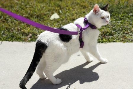 흰색과 검은 색 고양이 측면을 찾고