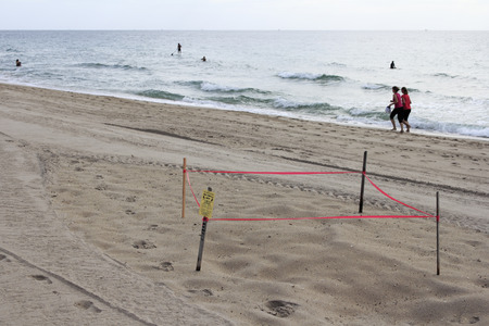 LAUDERDALE BY THE SEA, FLORIDA - JULY 14, 2013  Sea turtle nest protected by wood stakes, plastic red tape and a small sign with people walking, surfers, paddle boarders, swimmers and boats in back  Editorial