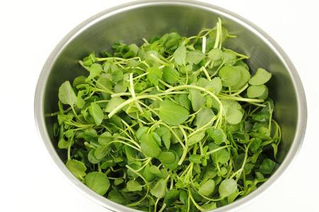 berros: Cerca de un tazón de acero inoxidable en blanco con pequeñas hortalizas de hoja verde berro utilizadas en ensaladas y como guarnición de bocadillos por su delicioso sabor y valor nutricional saludable