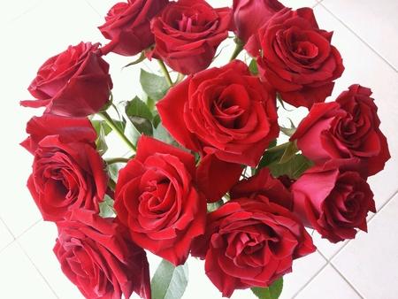 roses rouges: Bouquet de roses rouges, une douzaine de rose rouge des fleurs avec des feuilles vertes