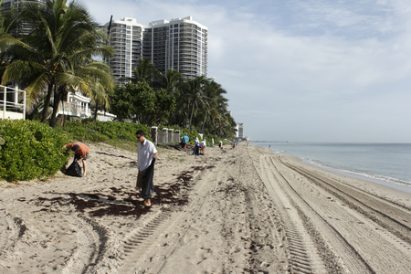 conservation: Fort Lauderdale, FL, USA - September 20, 2014: Volunteer people cleaning up beach trash at the yearly Ocean Conservancy International Coastal Cleanup.
