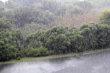 Heavy rain storm pouring over a road and fields with foliage in Caswell Beach, North Carolina. High view of rain pouring in a natural area of this small beach town.