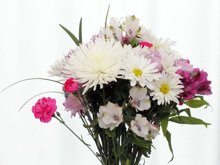 White, pink and purple flowers with leaves in front of a white curtain covered window. Colorful bouquet top of flowers in front of a white curtain window