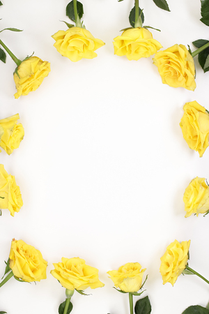 Yellow roses with pink spots flowers facing center Surrounding border of yellow rose blooms on white. Floral surround border outline of yellow rose flowers with green leaves around edges of white paper Stock Photo