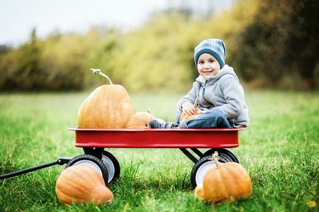 Happy little toddler boy on pumpkin patch on cold autumn day, with a lot of pumpkins for halloween or thanksgiving. Kid on pumpkin field on cold autumn day