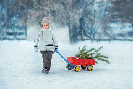 little boy carries a Christmas tree with red wagon. the child chooses a Christmas tree