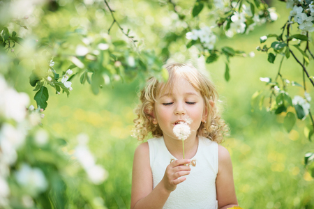 Little girl 5 years old sniffing a dandelion. girl sniffing flowers of apple orchard. garden with flowering trees. Happy childhood. Allergy season, insects