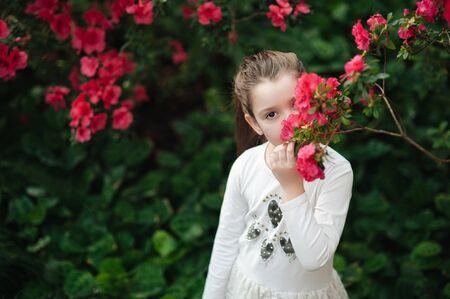 girl sniffing flowers of azaleas. flowering azaleas in the park.