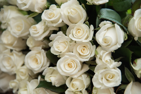close-up of a huge bouquet of white roses. background of the many roses wedding, the day of St. Valentine Stock Photo