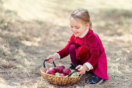 Child picking apples on farm in autumn. girl lying on ground near basket with pears and apples. Healthy nutrition. Harvest Concept.