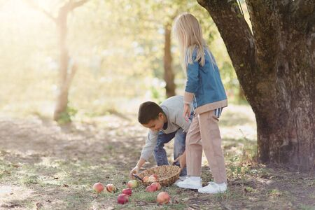 Children with Apple in Apple Orchard. Harvest Concept. Garden, Boy and girl eating fruits at fall. Child picking apples on farm in autumn. Children and Ecology. Healthy nutrition Garden Food. Stock Photo