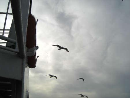 Seaguls photo