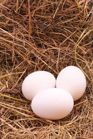 incubate: three eggs in hay