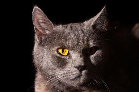Cat portrait on black background Stock Photo - 5473050