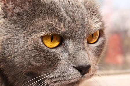 angry Cat face closeup photo