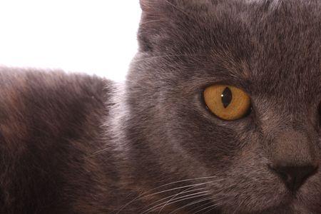 Cat eye closeup Stock Photo - 5473072