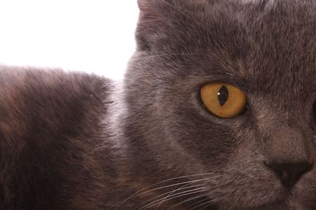 Cat eye closeup Stock Photo - 5473072