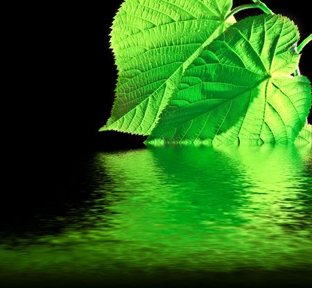 Grean leaf with water reflection on black background