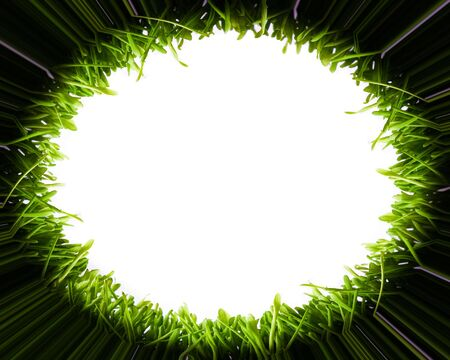 Round frame made from green grass photo