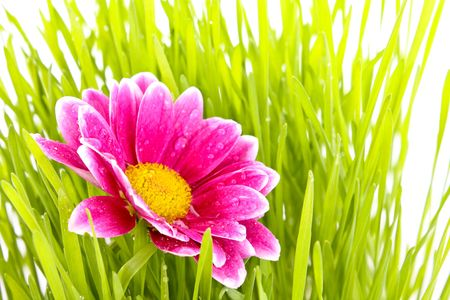Flower with grass photo