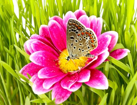 Butterfly on flower with grass photo
