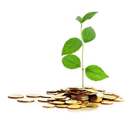 money plant: Gold Coins and plant isolated on white background