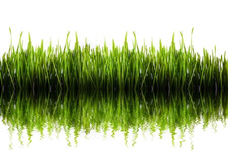 Green grass panorama isolated with water refleaction photo