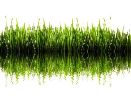 Panorama de hierba verde aislada con agua refleaction  Foto de archivo