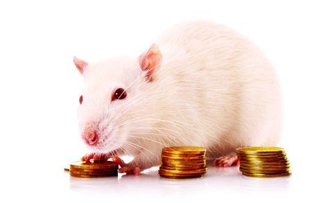 laboratory balance: Oro conte donna bianca monete isolato sul bianco Archivio Fotografico