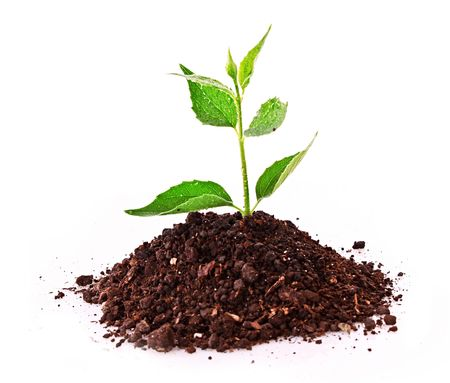 Young plant in ground over white Stock Photo - 6580778