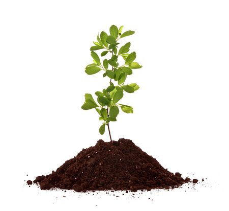 Young plant in ground over white background Stock Photo - 6835138