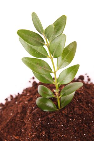 Young plant in ground over white background Stock Photo - 6839914