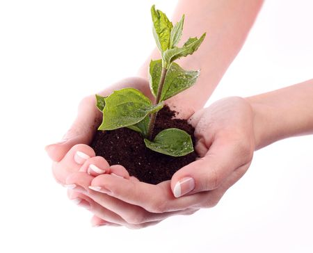 Young plant in hand over white Stock Photo - 6840505