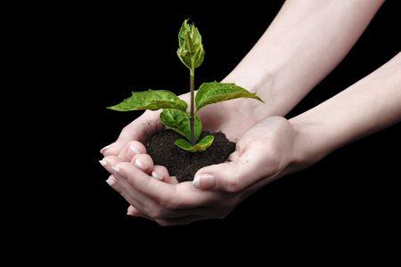 Jeunes plantes dans la main sur fond noir