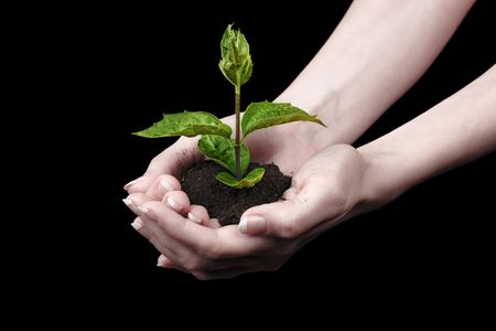 tree growing: Young plant in hand over black background