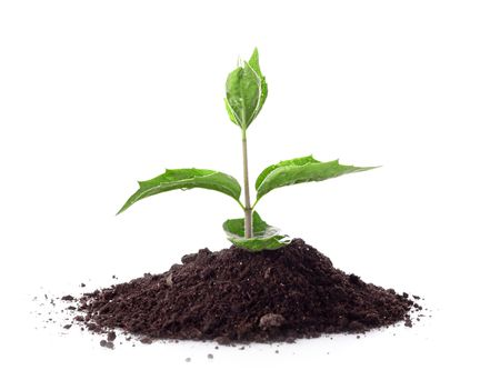 Young plant in ground over white Stock Photo - 6840489