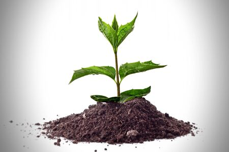 Young plant in ground over white Stock Photo - 6840464