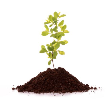 Young plant in ground over white background Stock Photo - 7164306