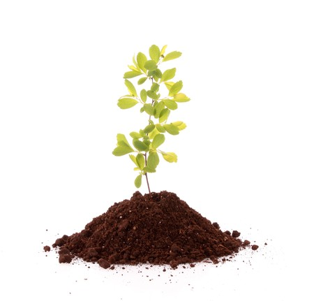 Young plant in ground over white background Stock Photo - 7164302