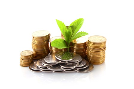 Coins and green plant isolated on white photo