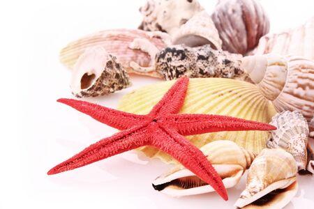 seastar: Seastar and few seashells isolated on white Stock Photo