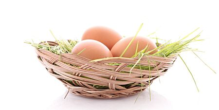 eggs in nest isolated on white photo