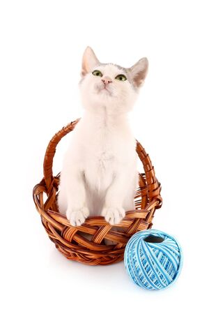cat in basket and wool ball isolated on white Stock Photo - 7963417